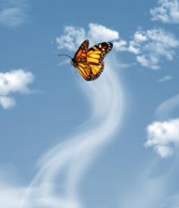 Papillon_Ciel